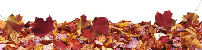 leaves-ground-b.jpg