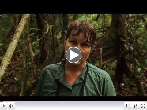 Dr. Cheryl Knott talks about the death from old age of wild orangutan, Kristen, in Gunung Paling National Park