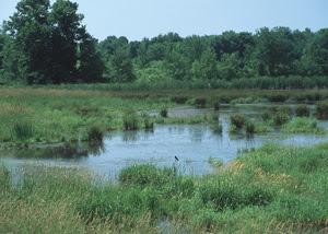 NRCS_wetland1