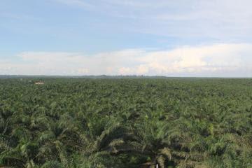 Exportaciones de Ucayali crecieron 39 por ciento en 2020 impulsadas por el aceite de palma y derivados