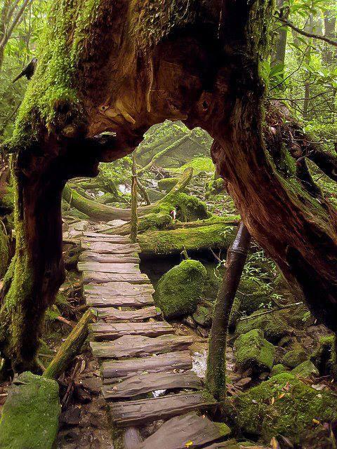 60 Hình ảnh Engaging của Charming Thiên nhiên đó sẽ đưa bạn vào Fairytale (phần 1)