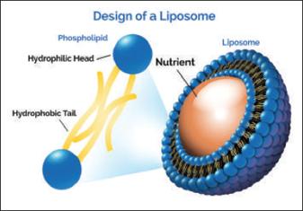 Liposome