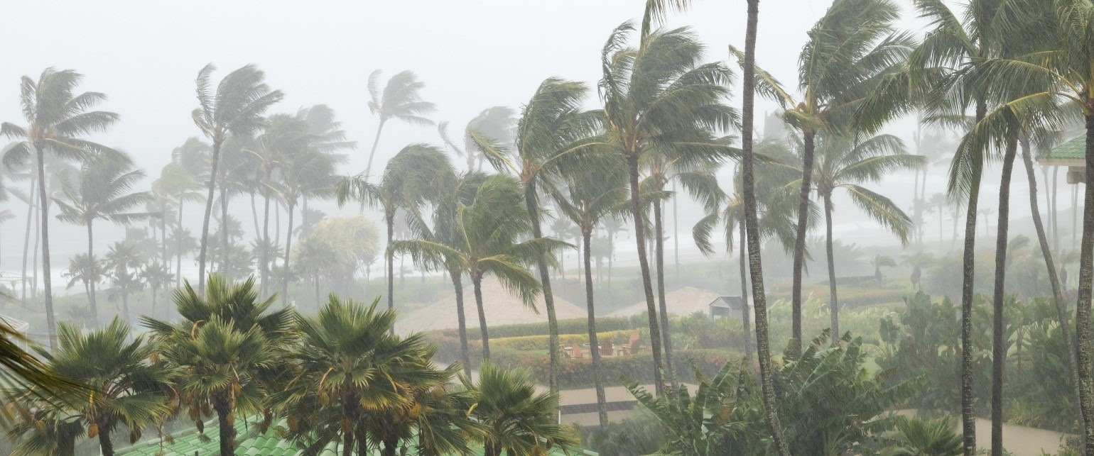 Picture of winds blowing against palm trees on a beach