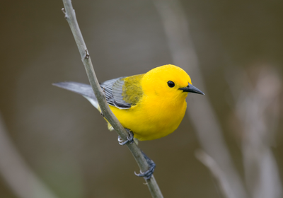 "Image result for birds"""