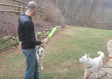 Check Out These 7 Dog Gadgets Tested by CrazyRussianHacker (Video)