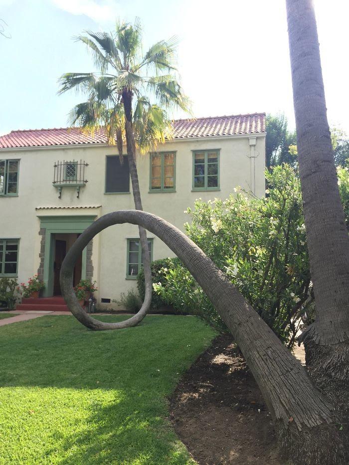 Пальма упала, но сумела подстроиться дерево, живучесть, жизнь, мир, планета, растительность, фото