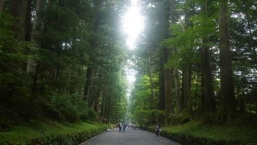 Nikko Sugi Namiki - Avenida de Cedros em Nikko