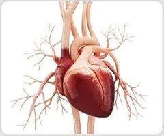 Unmarried heart disease patients have higher risk of death