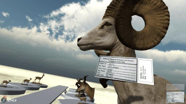VRゴーグルで見たアルガリの剥製のイメージ。 近づいてみると標本ラベルが表示されます。    (国立科学博物館)