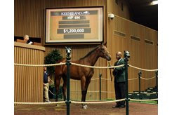A War Front filly consigned as Hip 696 sells to Shadwell for $1.2 million at the Keeneland September Yearling Sale