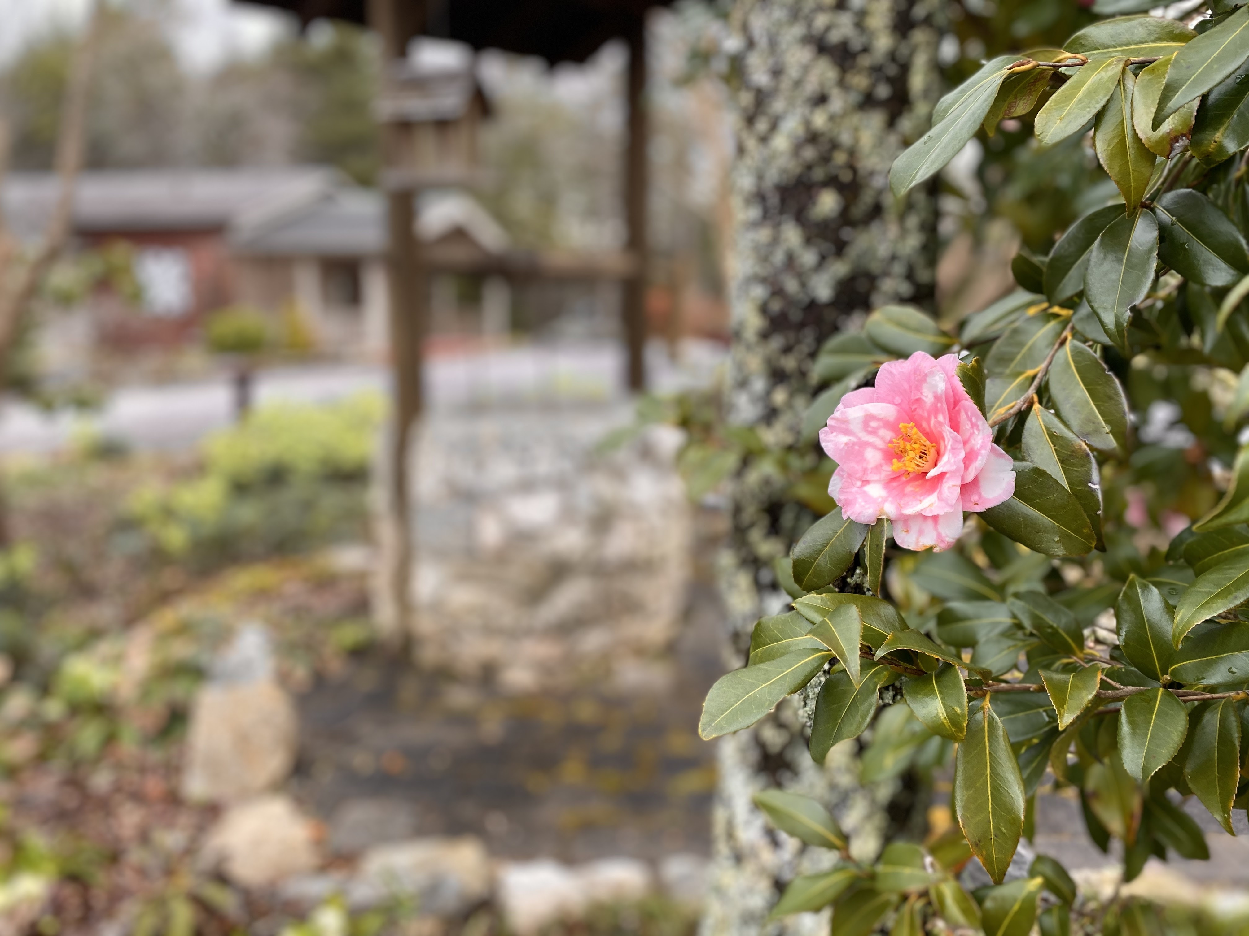Pink flower blooming near                     wishing well.