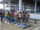 CE-Wilson-Fish-Market-Auki-Malaita-Solomon-Islands-180413-1-1024x768-1024x768-140x105.jpg