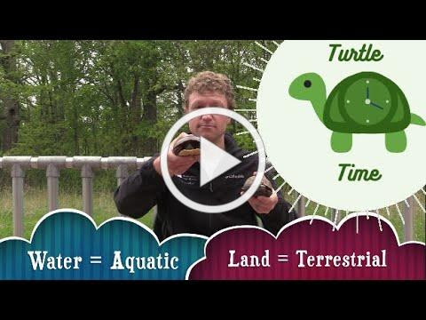 Turtle Time: Aquatic vs Terrestrial