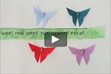 Screenshot of a video showing papers folded in the shape of butterflies.