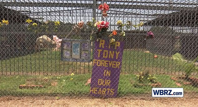 The camel came to the enclosure in 2018 a few years after a tiger, called Tony, passed away