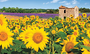 Provence & Spain