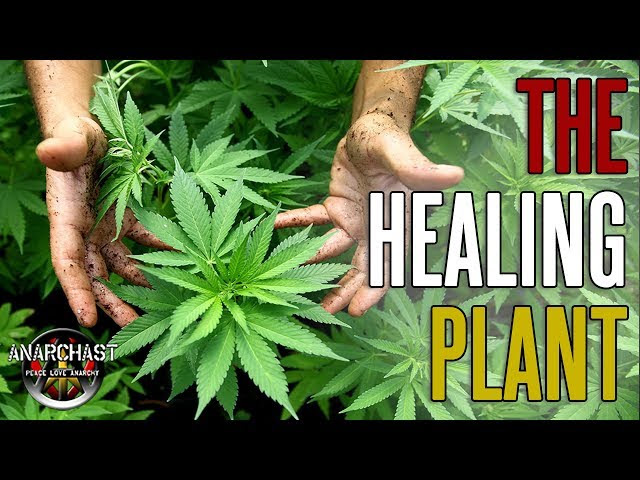 The Cannabis Conspiracy and What They Don't Want You To Know About This Miraculous Plant Medicine  Sddefault