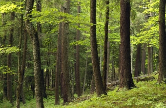 Michigan's Forest Legacy Program nomination applications are now available, and must be submitted by June 13, 2014.