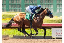 Cezanne takes an allowance optional claiming race at Los Alamitos Race Course