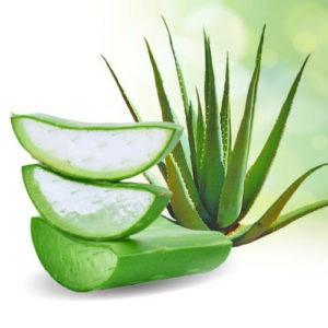 Aloe vera diabetes remedy, diabetes cure