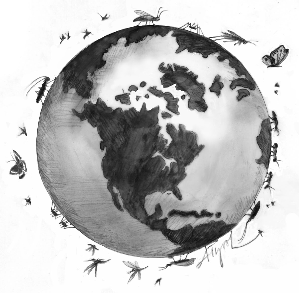 Insects around the world