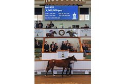 A daughter of Galileo, who has had 33  yearlings average $851,841, topped the Tattersalls October yearling sale