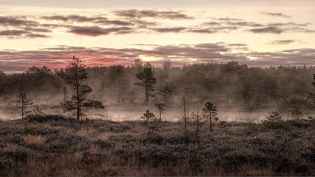 Національний парк Мукрі у волості Рапла, Естонія | Janno Loide (Amadvr)