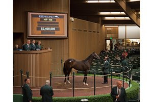 Hip 458 colt by War Front from Streaming and Hill 'n' Dale for $2.4M Keeneland September Sales from Sept. 7 to Sept. 23, 2018. Sept. 11, 2018 Keeneland in Lexington, Kentucky.