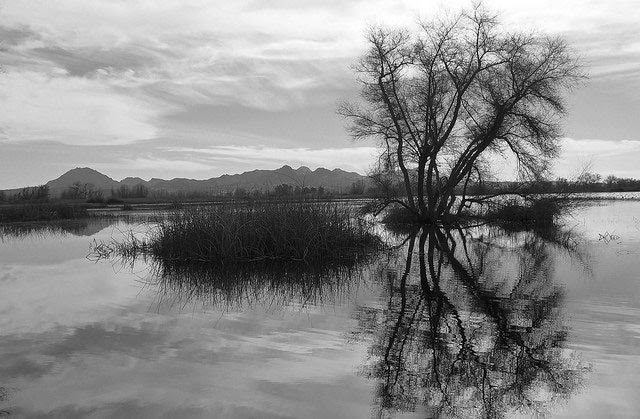 Gray Lodge                     Wildlife Area, Gridley, California