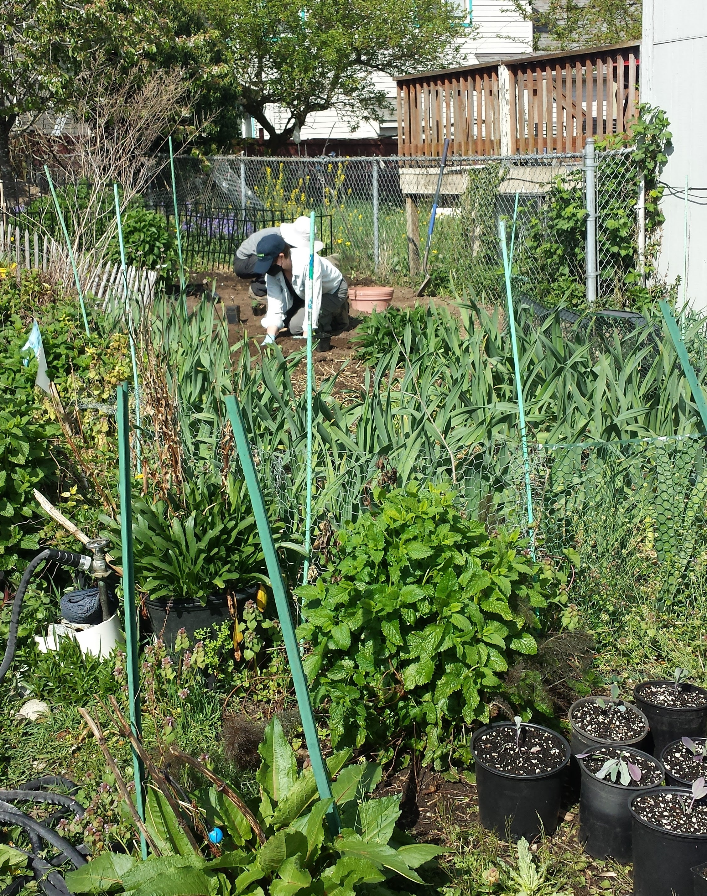 In the background, a volunteer is kneeling on the ground working the soil with their hands. In the foreground, there are many green plants on the farm that are different heights, shapes, and shades of green..