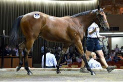 A Fastnet Rock filly consigned as Lot 470 tops the Inglis Melbourne premier yearling sale