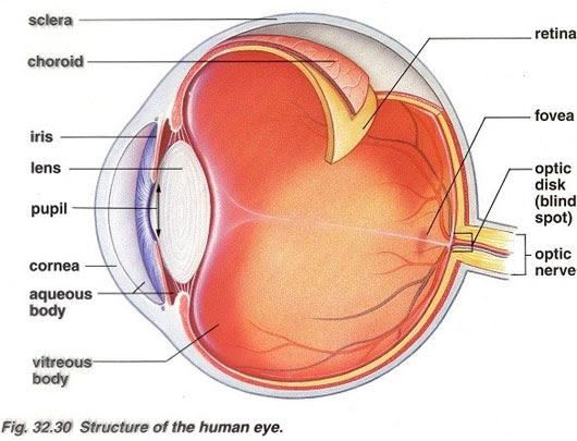 5 giác quan 'bật mí' giới hạn đỉnh điểm của con người