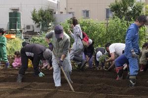 中村顧問が手前で畝をつくり、スタッフが中央で植える位置を決め、奥で子どもたちが植える