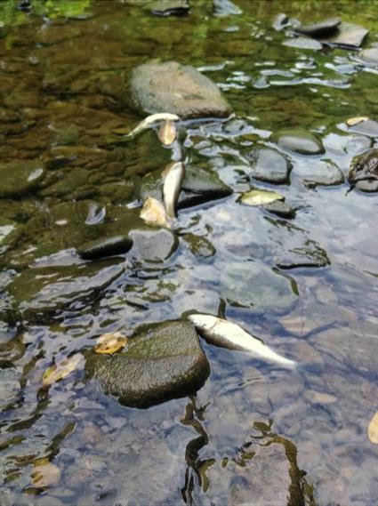 FishKillOH2014-PhotobyEvan-CollinsRachelWadell.png