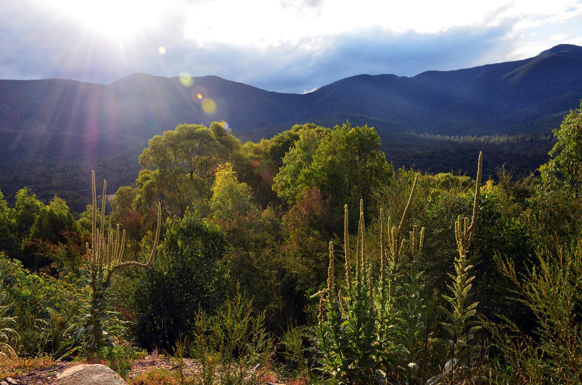 Durante este 2020, han ardido en Australia casi 11 millones de hectáreas de bosque y zonas verdes y han dejado unos 3.000 millones de animales muertos o heridos, sobre todo en los territorios de Nueva Gales del Sur y Victoria, los más afectados por las llamas. A raíz de eso, miles de koalas de estas dos regiones han perdido el 80% de su hábitat natural. Aunque el Gobierno australiano ha invertido 200 millones de dólares para salvar a esos animales y a otras especies, en la recuperación de la fauna y flora está siendo decisivo el turismo