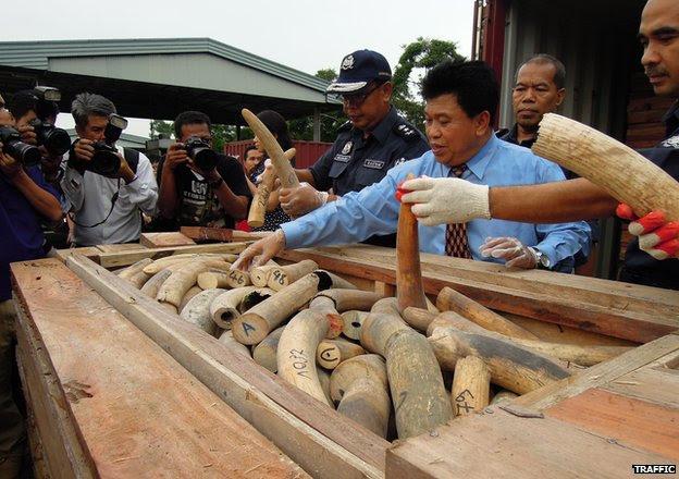 seized ivory shipment