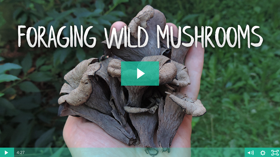 Foraging Wild Mushrooms ~ Online Course Is Now Open For Enrollment