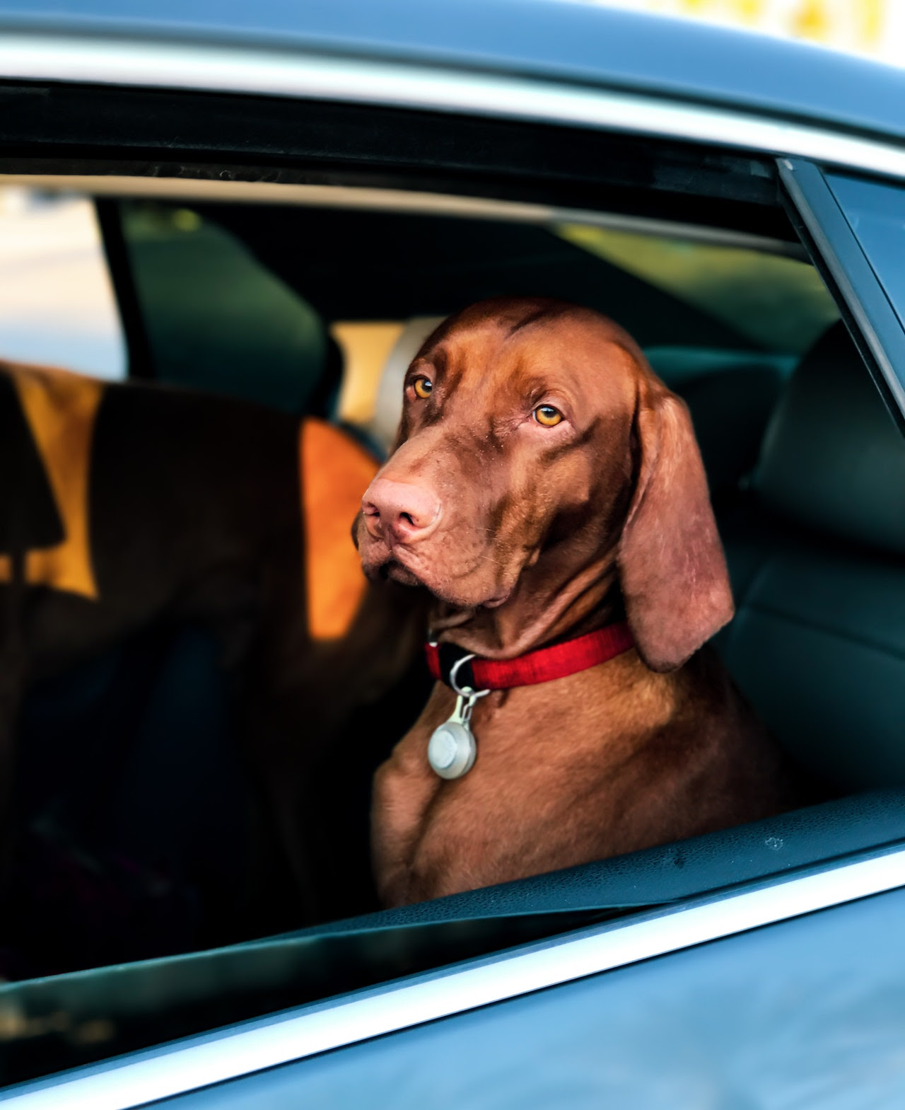 dog looking out window. Car safety post