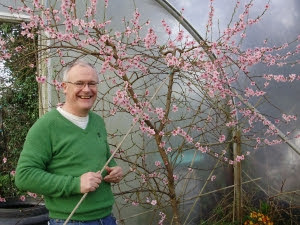 Gerry Kelly - my co-host on our 'Tunnel to Table' radio series on LMFM Radio's  'Late Lunch Show' - helping to pollinate the peach trees 2 years ago.