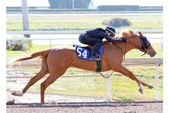 Hip 54, a filly by Orb from the Tom McCrocklin consignment, breezes a quarter-mile in :21 flat at the Gulfstream sale