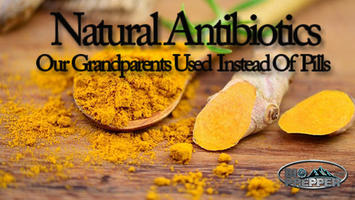 17 Natural Antibiotics Our Grandparents Used Instead Of Pills