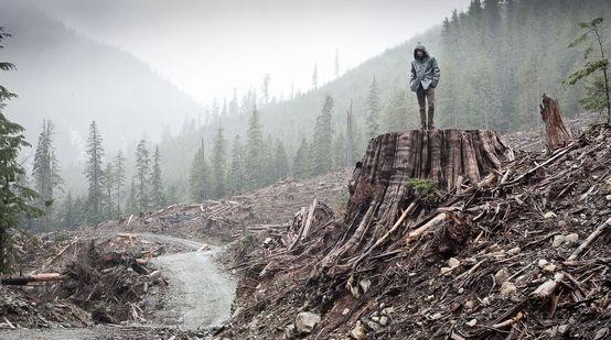 Tala de bosque costero en la isla de Vancouver en Columbia Británica, Canadá