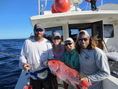 Red Snapper Research