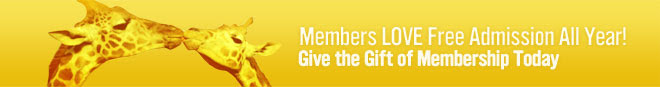 Members get in free all year: Give the gift of membership