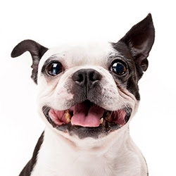 5 tips for a healthier dog smile