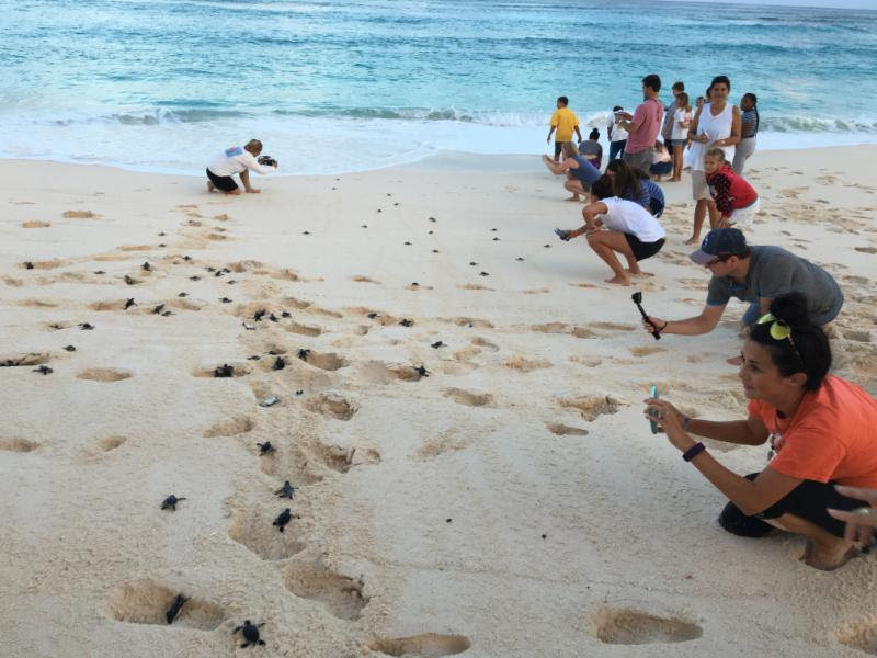 turtles released, Hope Town