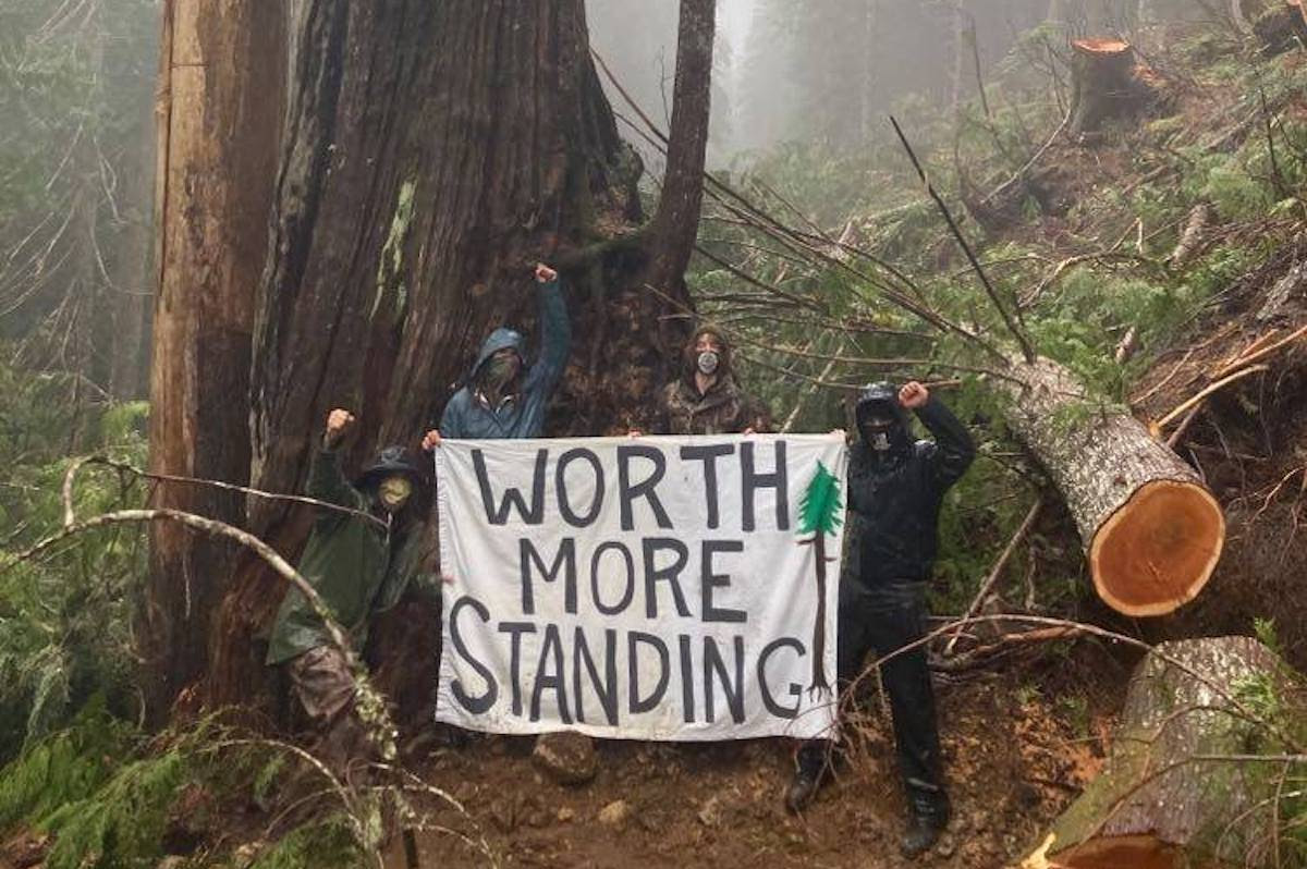 A group of forest activists have created a new blockade along Bugaboo Creek, near Port Renfrew, where logging company Teal Jones Group is working to clear cut another section of old-growth trees on the southern part of Vancouver Island. (Facebook/Fairy Creek Blockade)