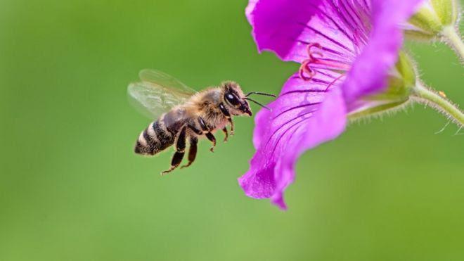 O que as abelhas podem ensinar aos economistas sobre o funcionamento dos mercados