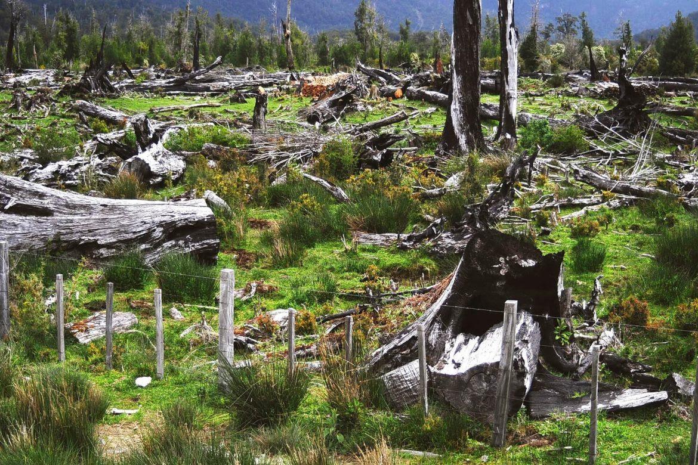 deforestacion-500-hectareas-deforestacion-cuarentena-Rodrigo-Botero-1170x780