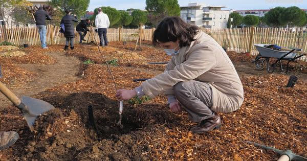 Des jardins-forêts plantés en plein cœur de ville